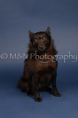 M&N Photography -DSC_3907