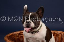 M&N Photography -DSC_0675