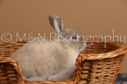 M&N Photography -_SNB0503