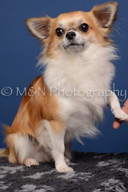 M&N Photography -DSC_4990-2