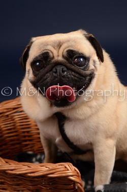 M&N Photography -DSC_0338