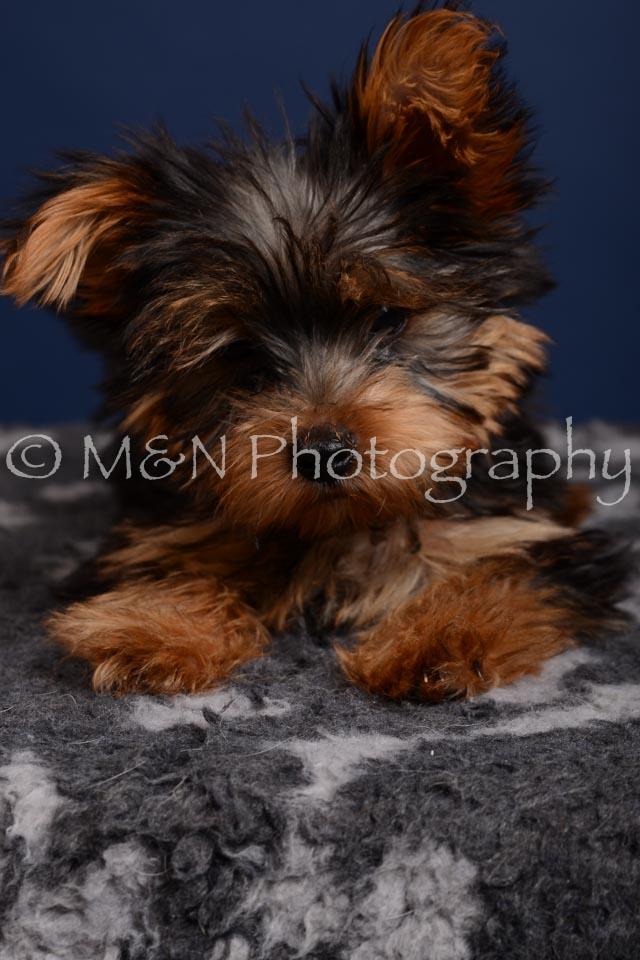 M&N Photography -DSC_4353