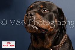 M&N Photography -DSC_4052-2