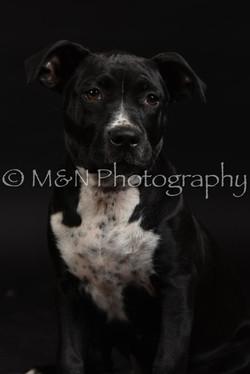 M&N Photography -DSC_2659