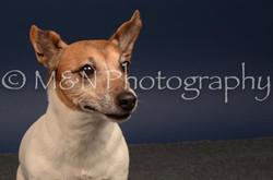 M&N Photography -DSC_4591