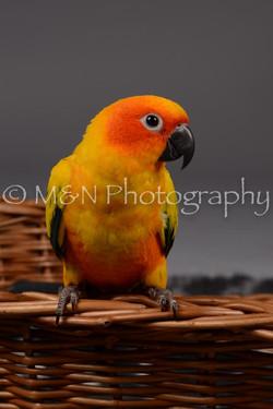 M&N Photography -DSC_2122
