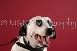 M&N Photography -DSC_3103