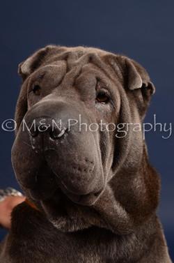 M&N Photography -DSC_0287