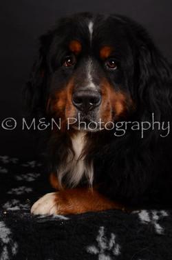 M&N Photography -DSC_5716