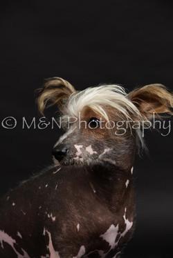 M&N Photography -DSC_2495