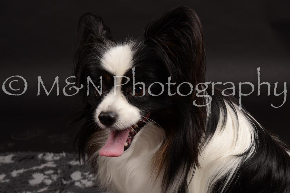 M&N Photography -DSC_9808