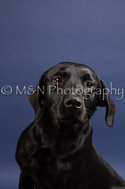 M&N Photography -IMG_4769