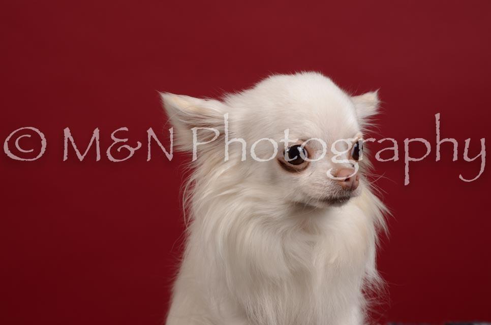 M&N Photography -DSC_3262