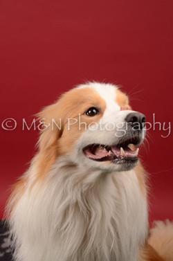 M&N Photography -DSC_6730