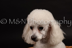 M&N Photography -DSC_9981