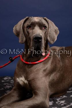 M&N Photography -IMG_4608