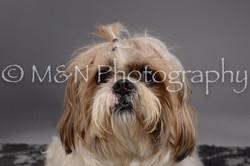 M&N Photography -DSC_1624