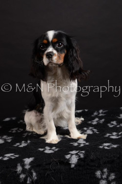 M&N Photography -DSC_5441