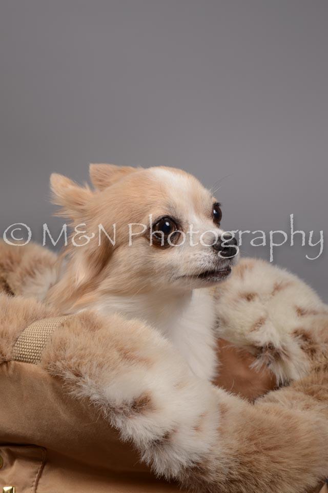 M&N Photography -DSC_1647