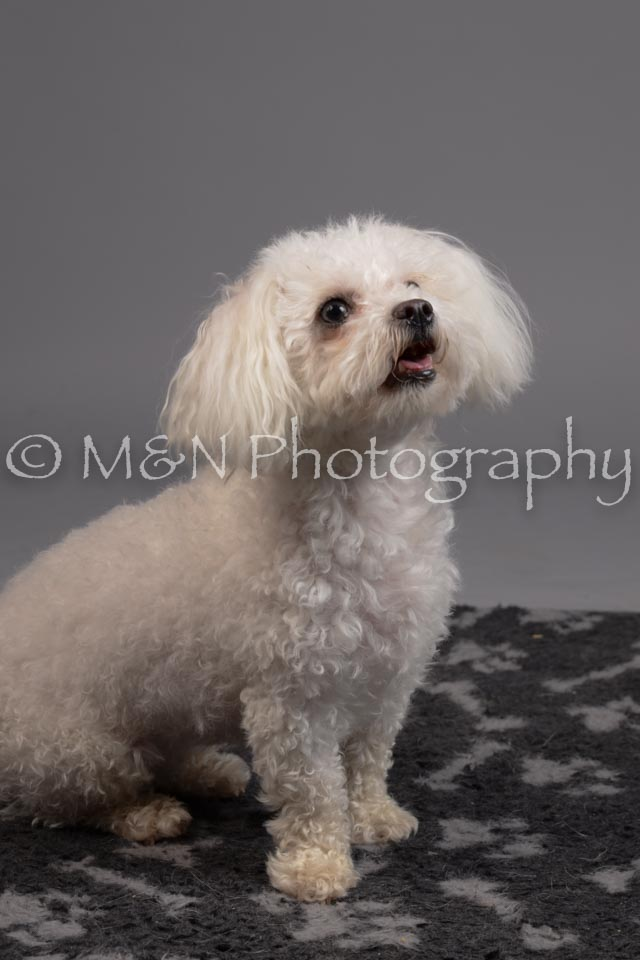 M&N Photography -DSC_2702
