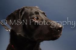 M&N Photography -DSC_4173