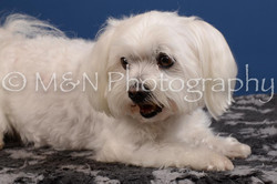 M&N Photography -DSC_5207