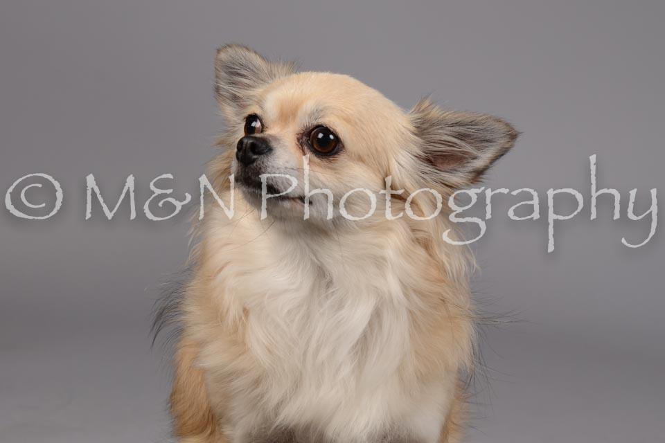 M&N Photography -DSC_1806