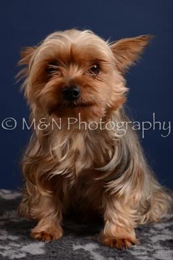 M&N Photography -DSC_4115