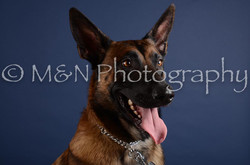 M&N Photography -DSC_3988