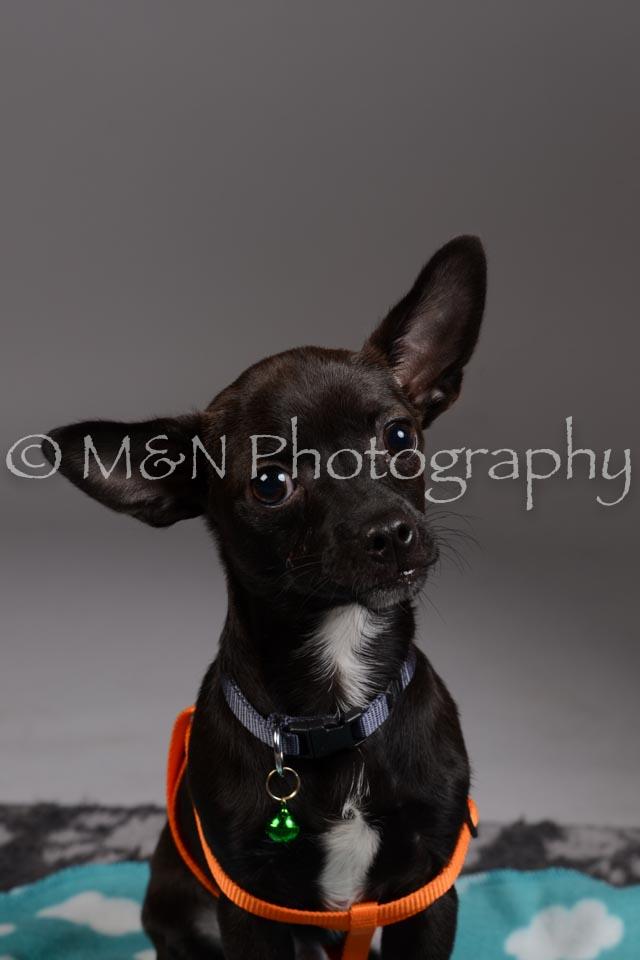 M&N Photography -DSC_2454