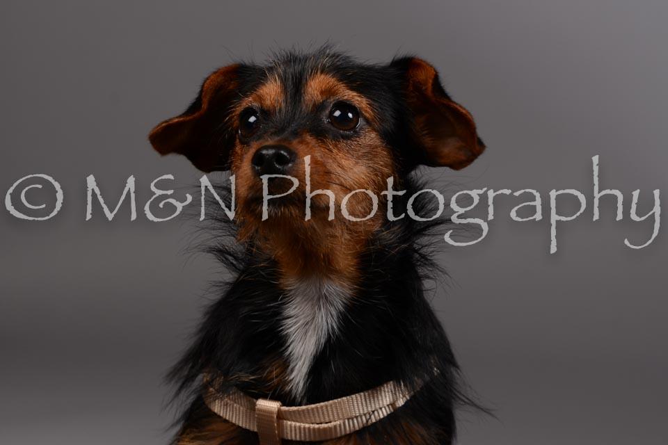 M&N Photography -DSC_1503