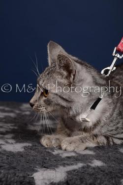 M&N Photography -DSC_4268-2
