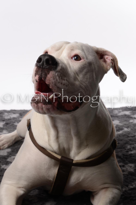 M&N Photography -DSC_8771