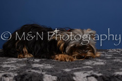 M&N Photography -DSC_5195