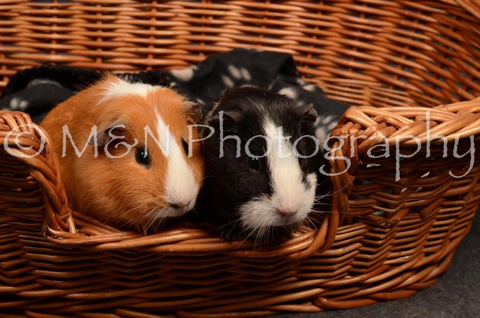 M&N Photography -DSC_4732