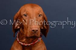 M&N Photography -DSC_4540