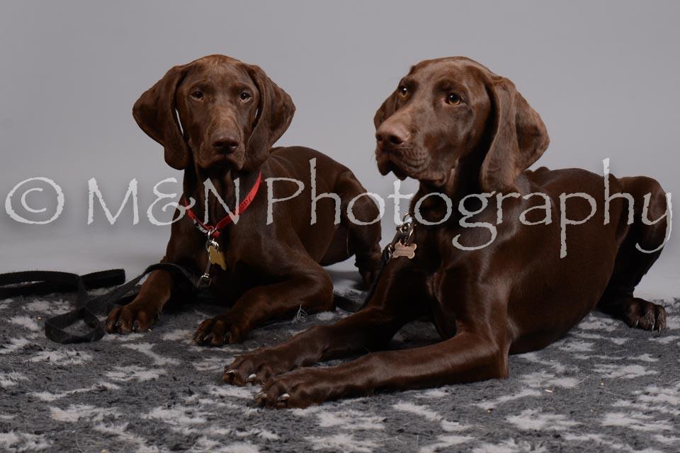 M&N Photography -DSC_2598