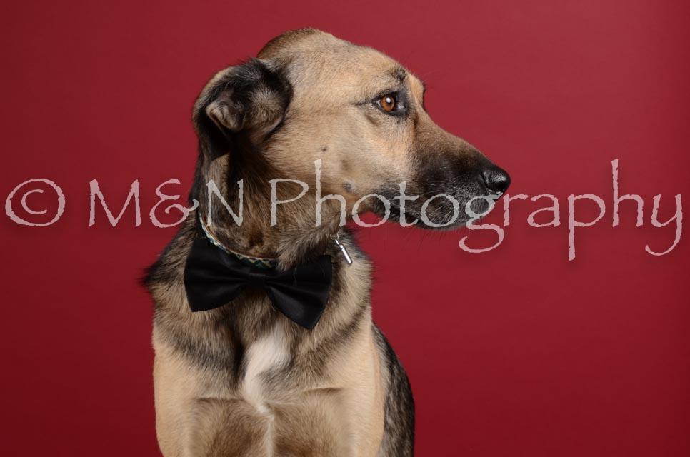 M&N Photography -DSC_3494