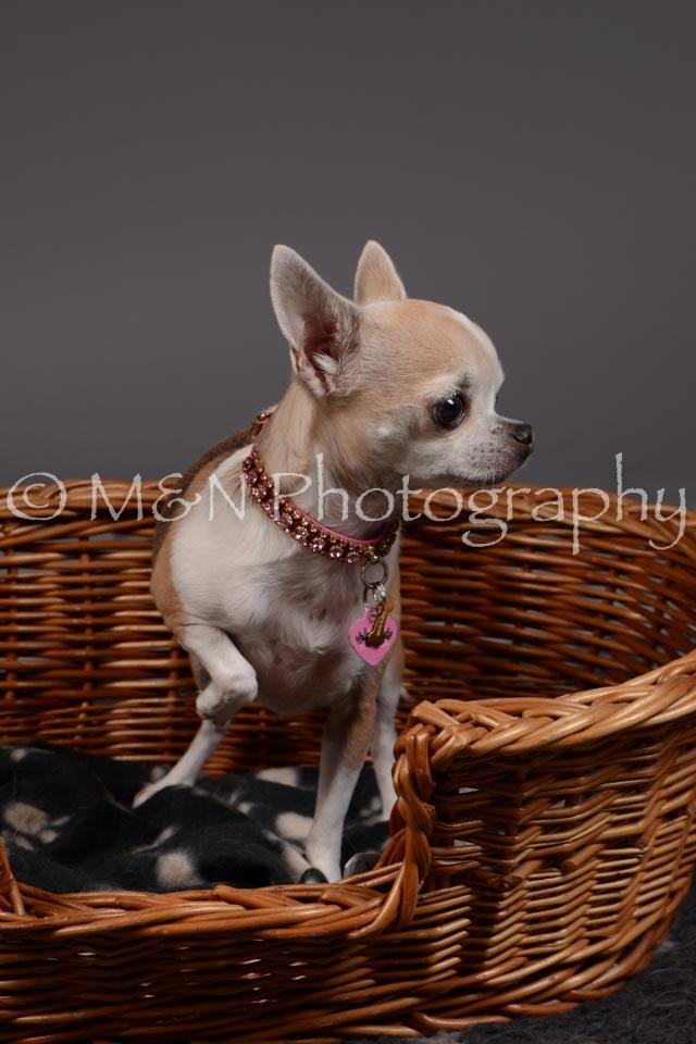 M&N Photography -DSC_2185