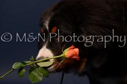 M&N Photography -DSC_3788