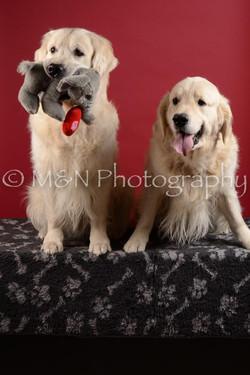 M&N Photography -DSC_3487