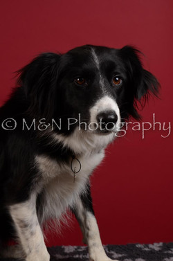 M&N Photography -DSC_3455
