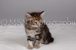 M&N Photography -DSC_2994