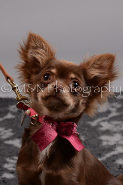 M&N Photography -DSC_2557