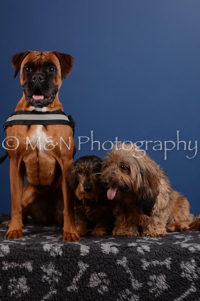 M&N Photography -DSC_5256