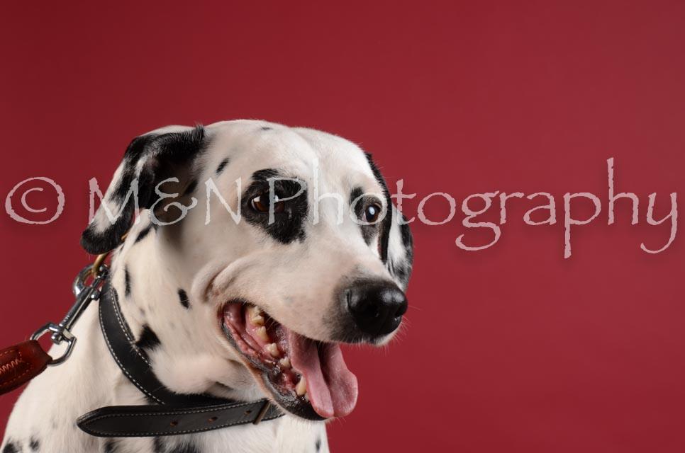 M&N Photography -DSC_3111
