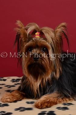 M&N Photography -DSC_3556