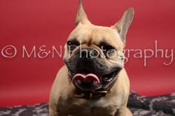 M&N Photography -DSC_8483