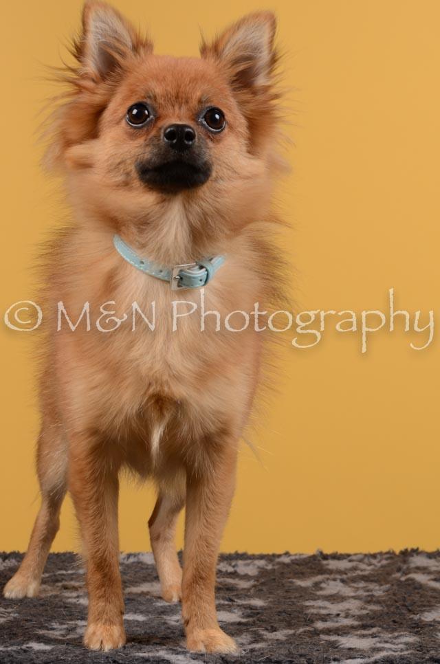 M&N Photography -DSC_4738