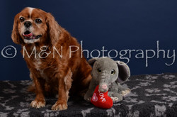 M&N Photography -DSC_4300